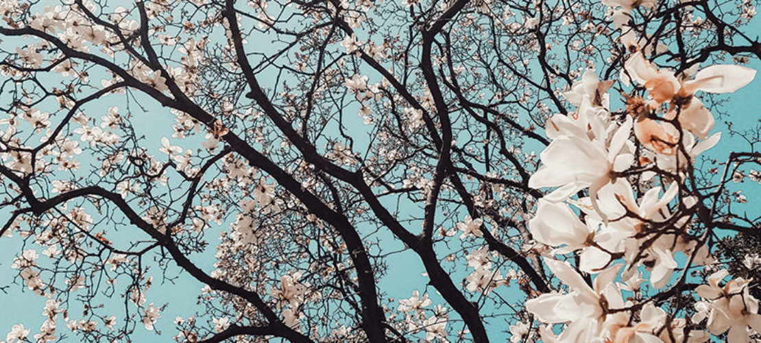 Shibashi, 18 mouvements pour méditer